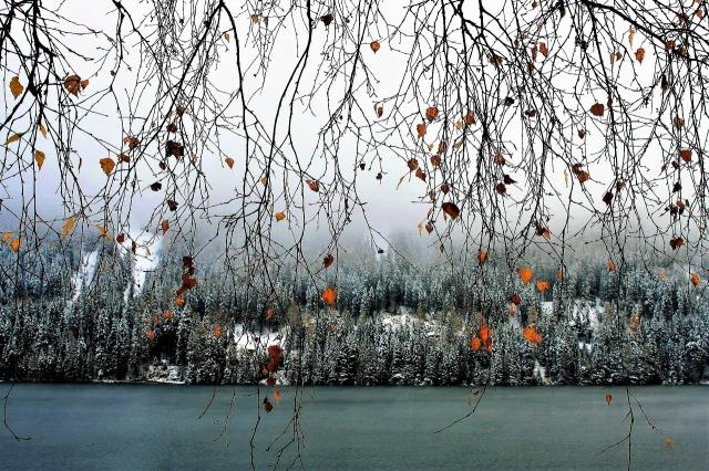 twigs-2941230_1280